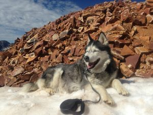 Luna at Blitz Pass between Ophir and Telluride, Summer 2014